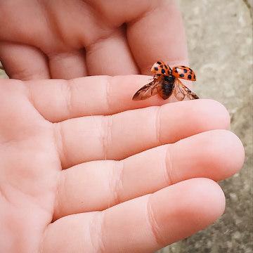 Lady bug addy's hand
